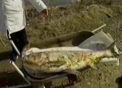 Замор на Малоистокском водохранилище (видео)