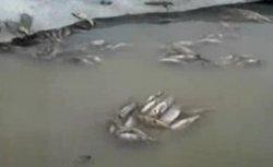Обмелел водоем у поселка Карги (видео)