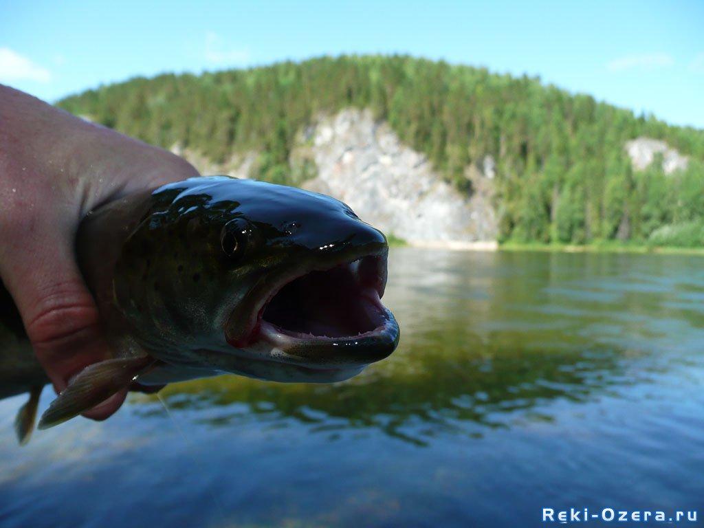 рыбалка на улсе