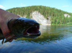 Сплав и рыбалка на Улсе и Вишере