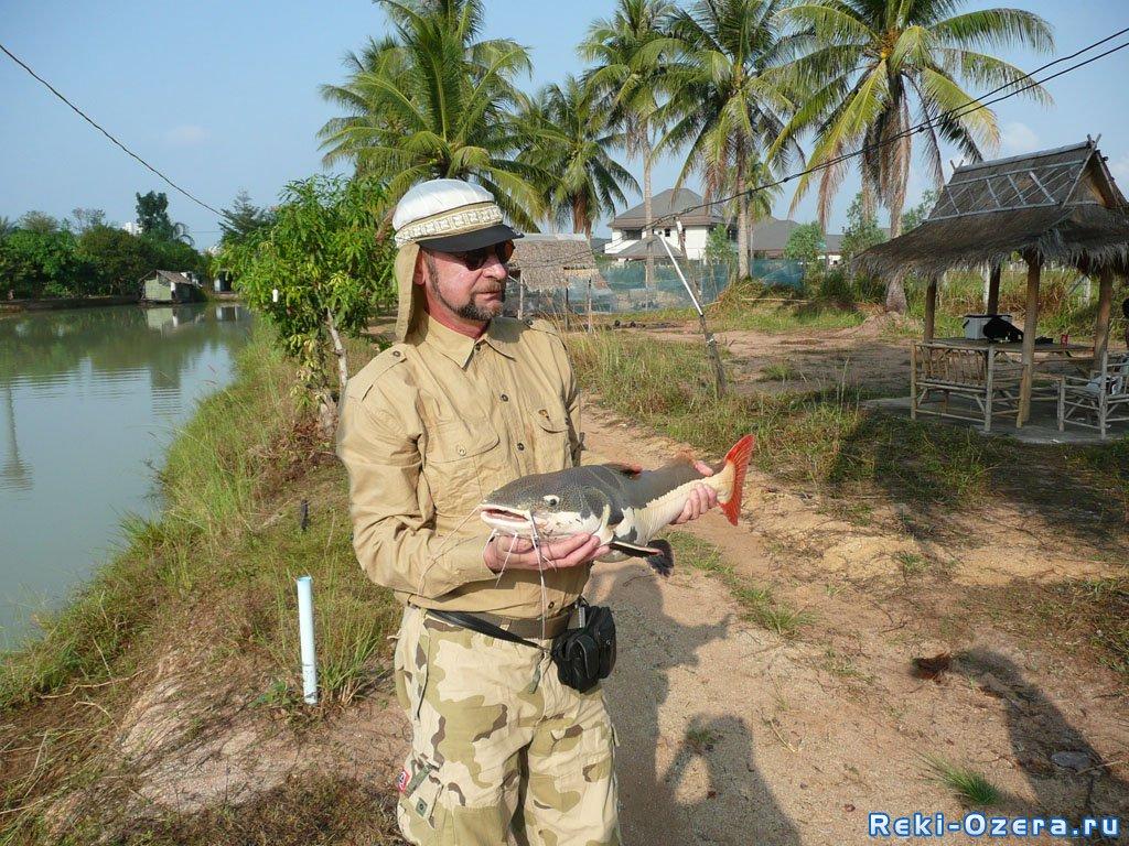 краснохвостый сом рыбалка