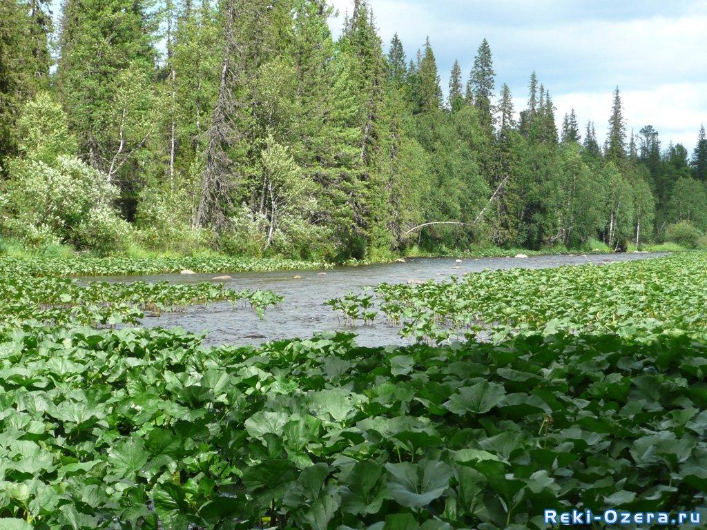 рыбалка в половодье на малых реках