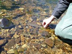 Горная рыбалка на реке Велс.