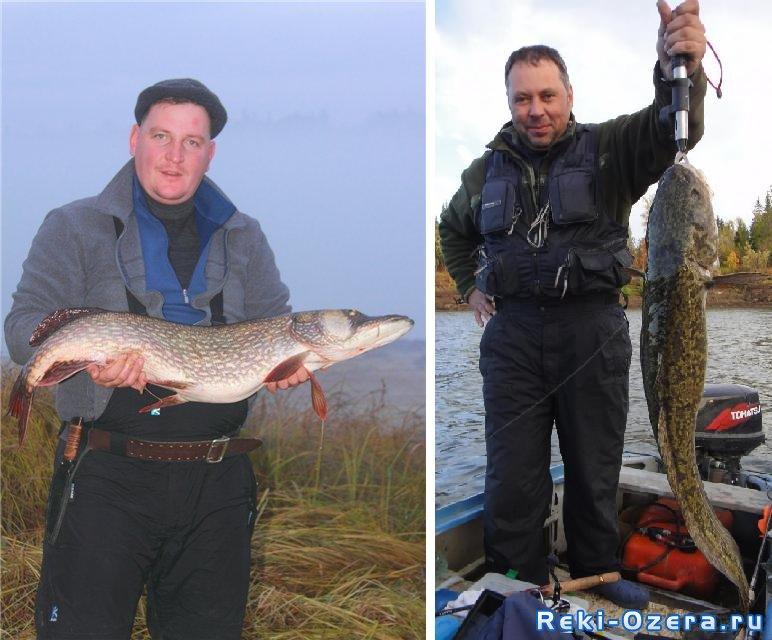 на что можно ловить рыбу в прудах