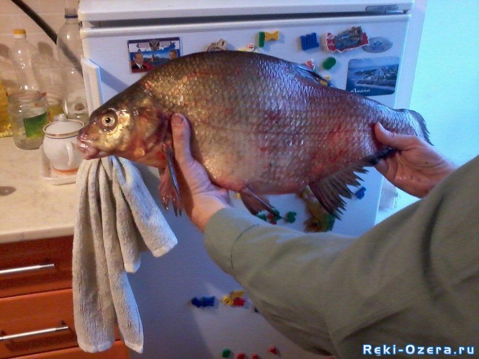 К чему беременной приснилась рыба 35