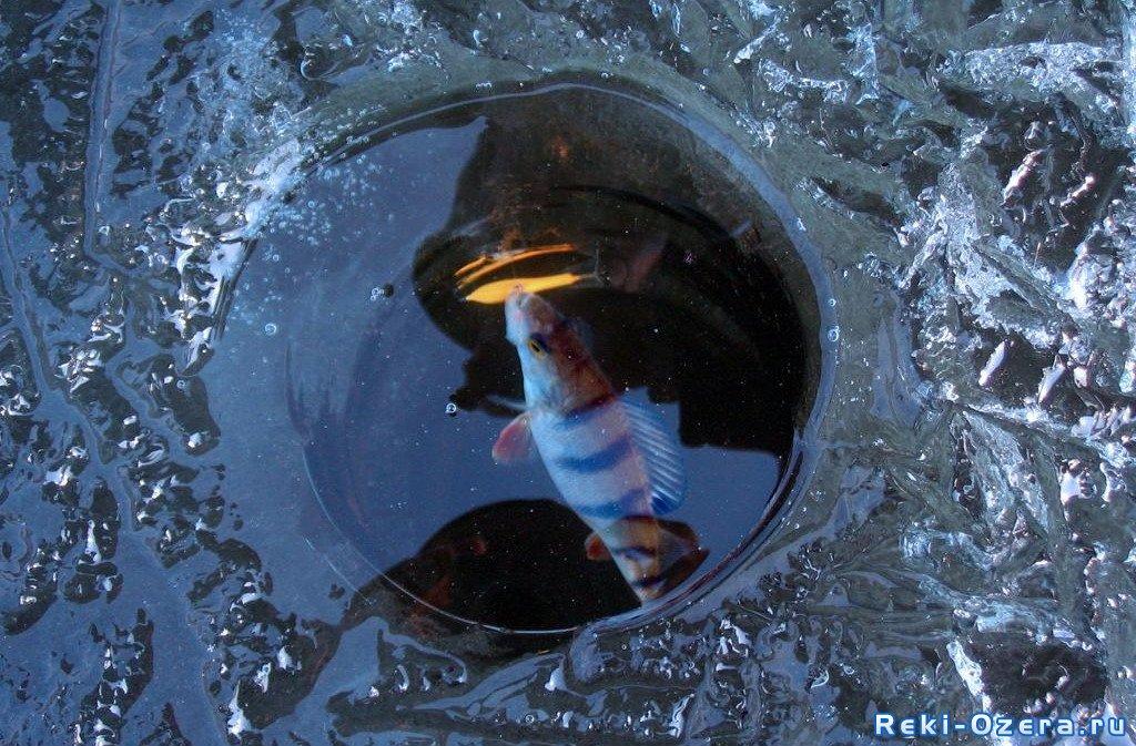 сани волокуши для зимней рыбалки