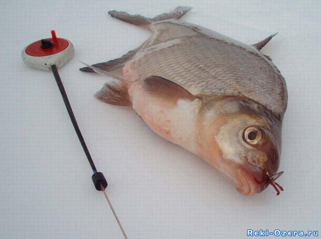 зимняя рыбалка кемеровская область
