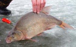 Зимняя рыбалка на леща