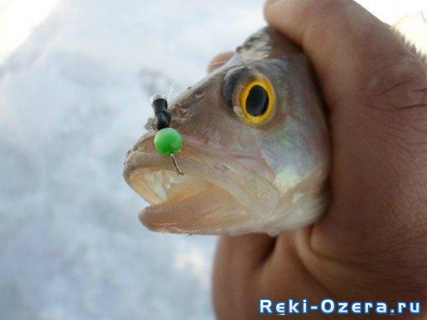 озеро кислое курганская область рыбалка