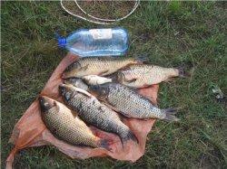 озеро ваенгское рыбалка