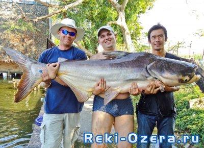 Баррамунди, змееголов и другие. Рыбалка в Тайланде.