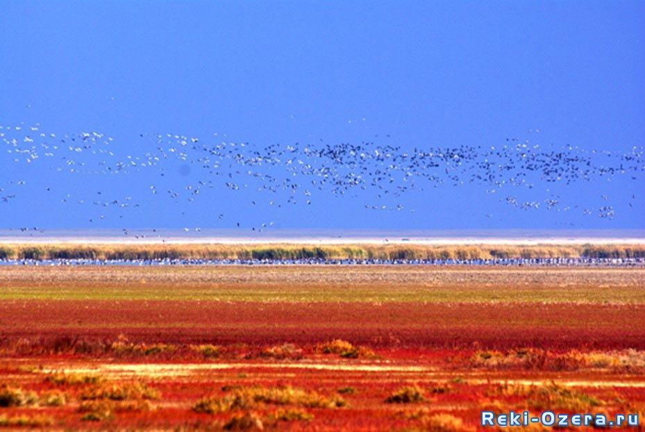 Озеро Койбагар (Карасу) Казахстан