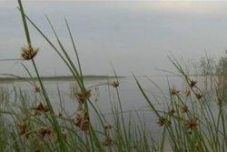 Архангельское (Черноборка)