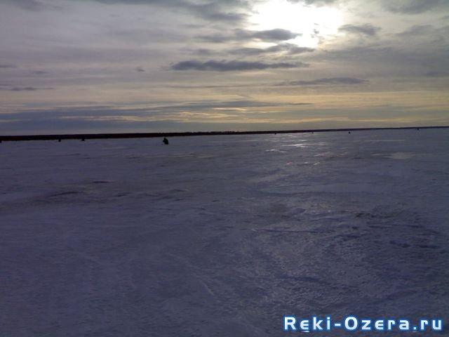 толстолобик зимой фото