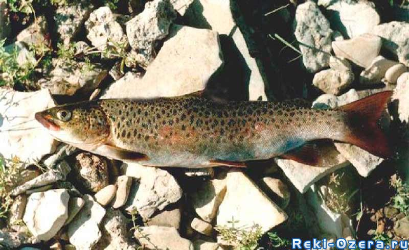 рыбалка в хантомансийске