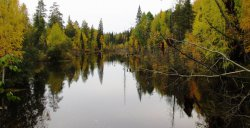 Баранчинский пруд