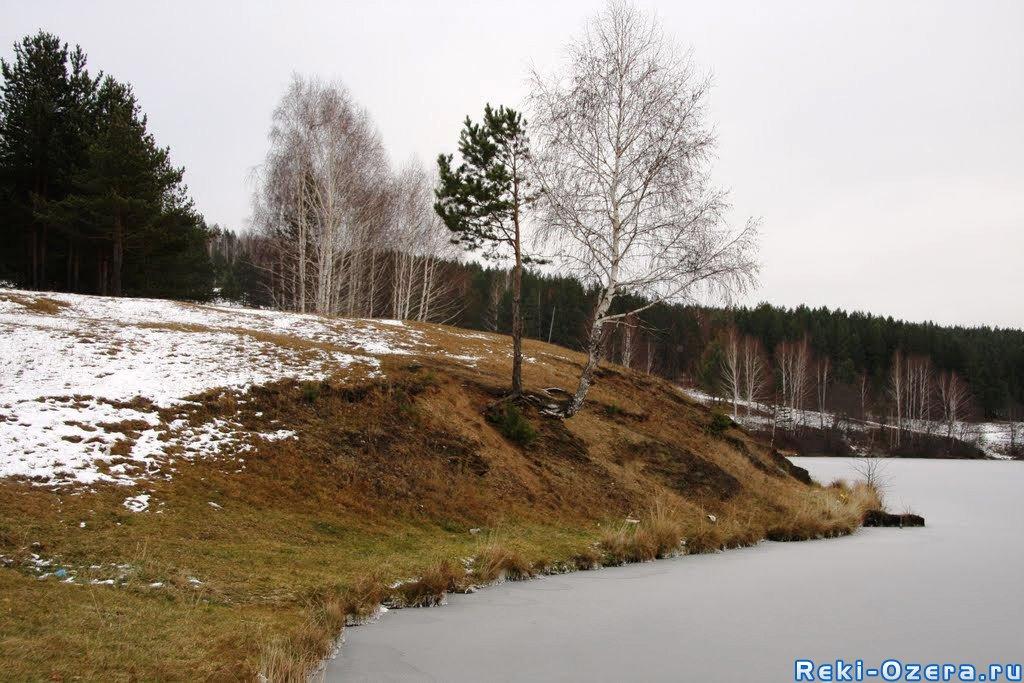 толстолобик зимой в пруду