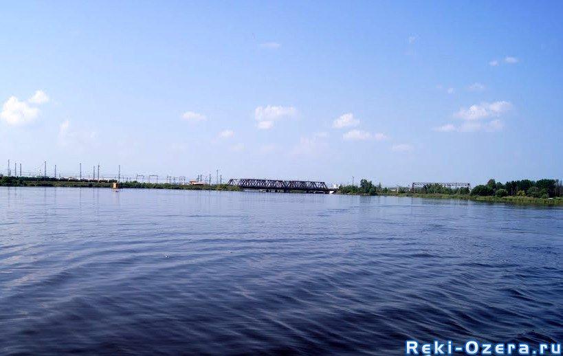 толстолобик в челябинской области