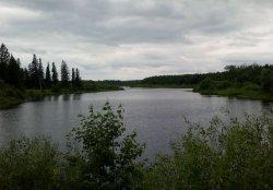 Ошкуковский пруд (р. Тугулымка)