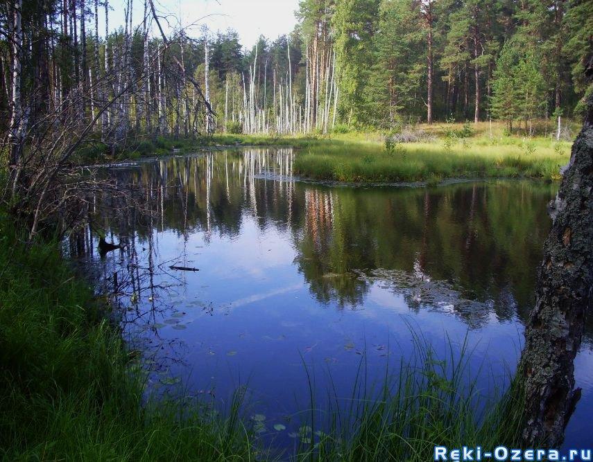 озеро карасье рыбалка